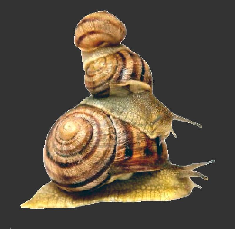 escargot_76