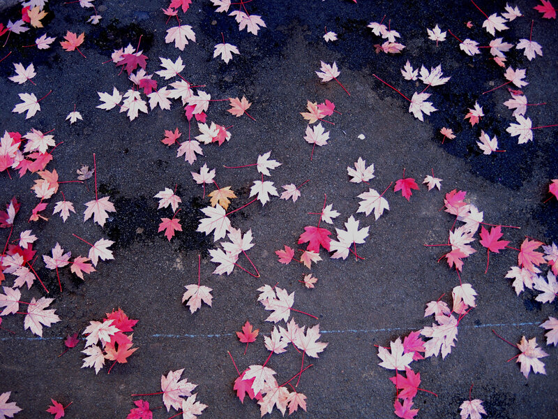 Bayonne, rue des Jacobins, automne
