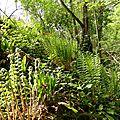 Sortie en forêt 44.