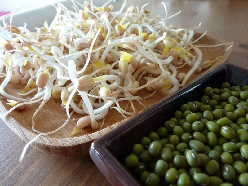 Les pousses (ou germes) de soja