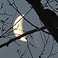 Un joli quart de lune...