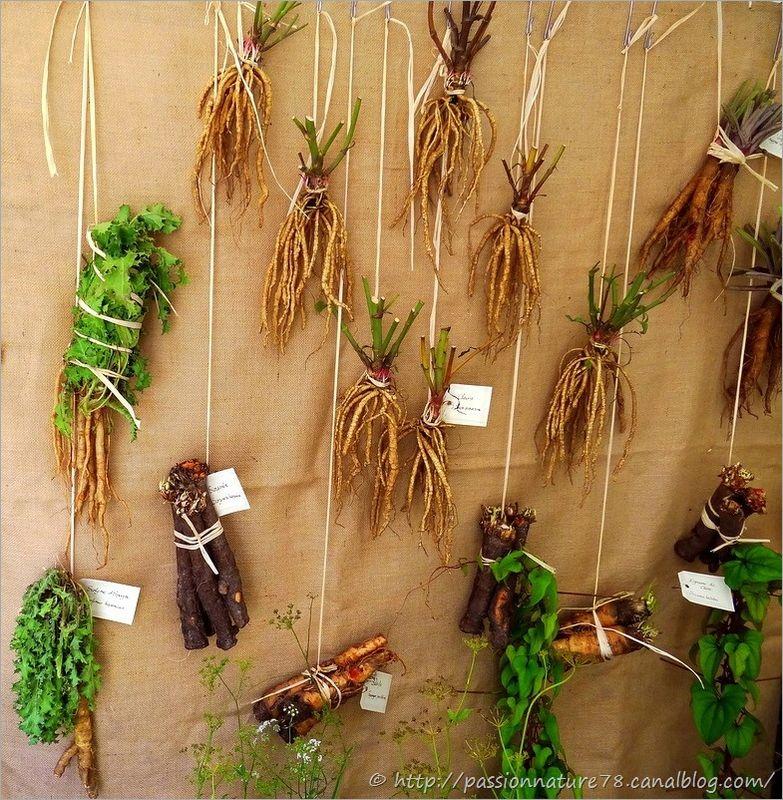 Les légumes d'autrefois (4)