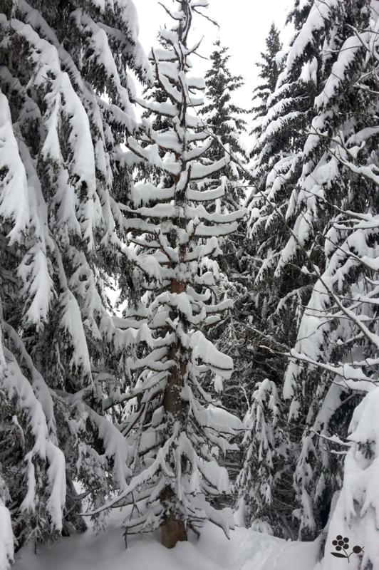 Arbres & neige_9