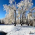 A bit of winter beauty !
