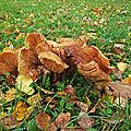 52_champignons_3