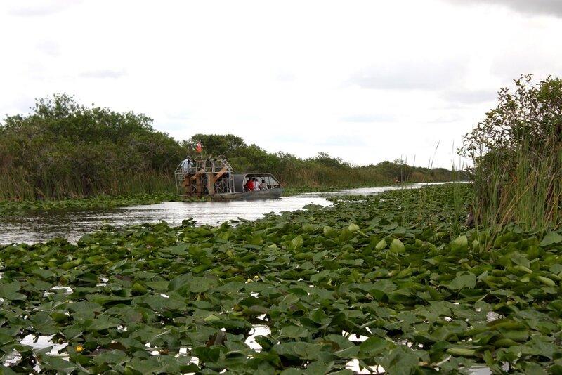 J24 - 21 juillet 2014 Everglades (143).JPG