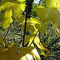 Les feuilles d'automne - ardèche 2016