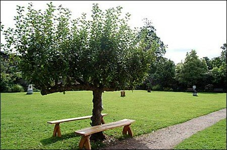 apple_tree_465x309
