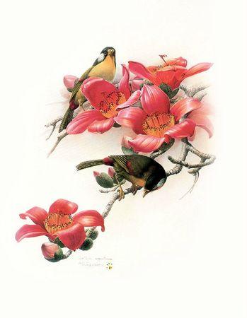 Tableau superbe oiseaux 2 et fleurs rouges TB ea6d64cb