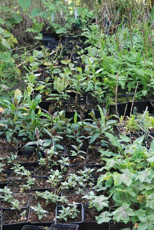 Plantes halle