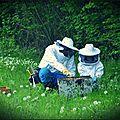 Abeilles et agriculture: pour en finir avec le conflit