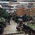 Laitai, grand marché aux fleurs