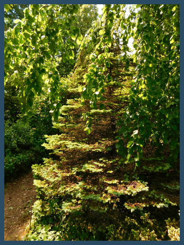 Arboretum des prés de Culand23