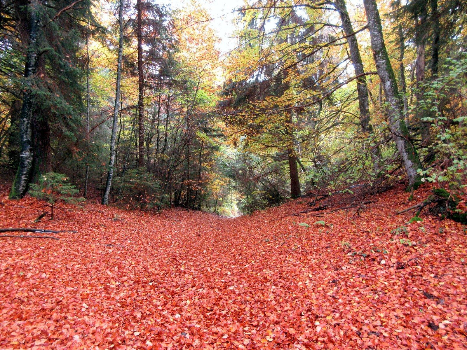 automne dans la chaîne des puys