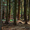 Forêt de perche -trappe jeudi 15 aout 16h39