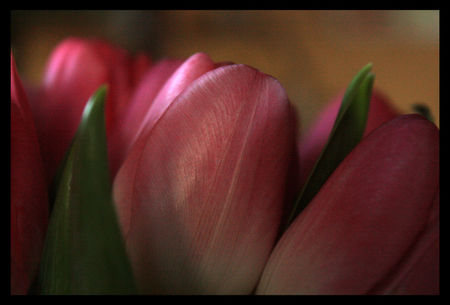 tulipes_floues