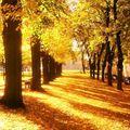 Jour d'automne @isadeline