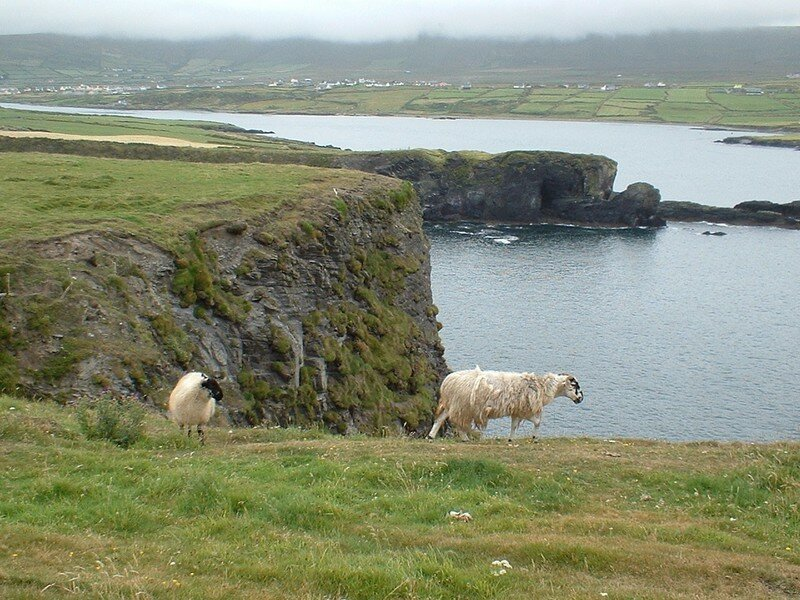 valenta islan moutons