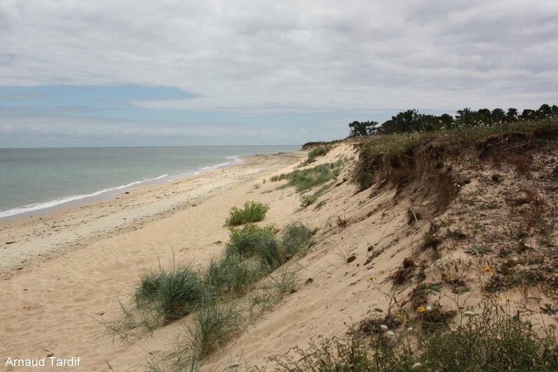 00585 Noirmoutier Juin 2020 - L'Ile d'Yeu - La Plage de la Petite Conche et la Pointe de la Sablière