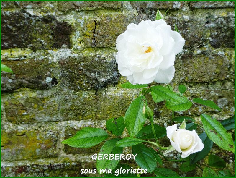 J blanc1