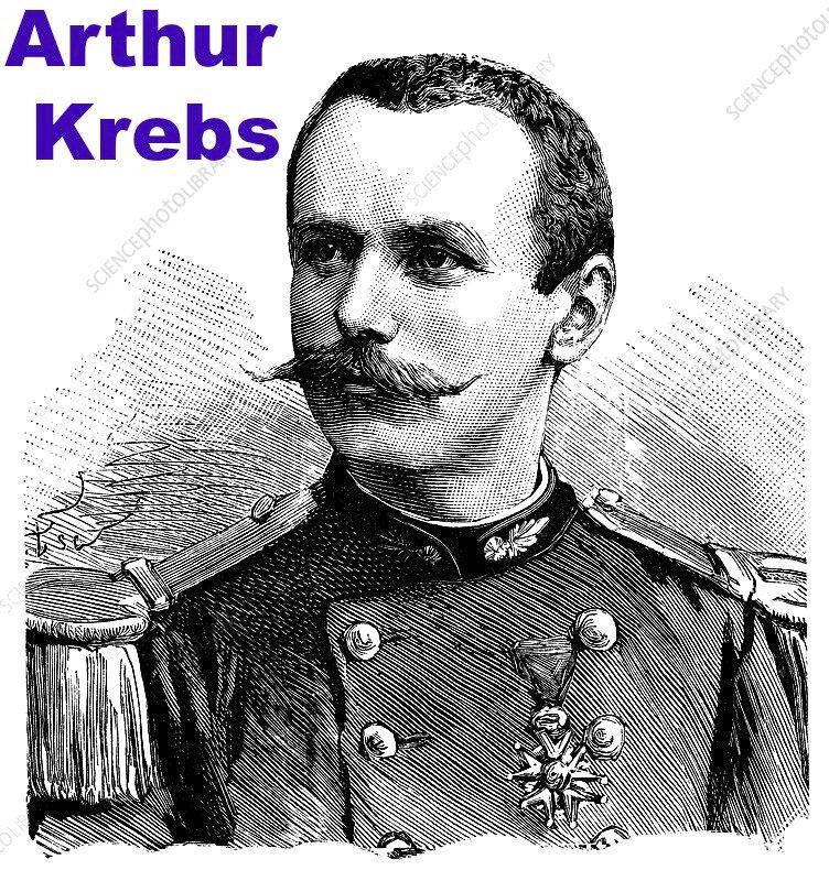 arthur_krebs