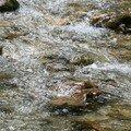 eau claire....