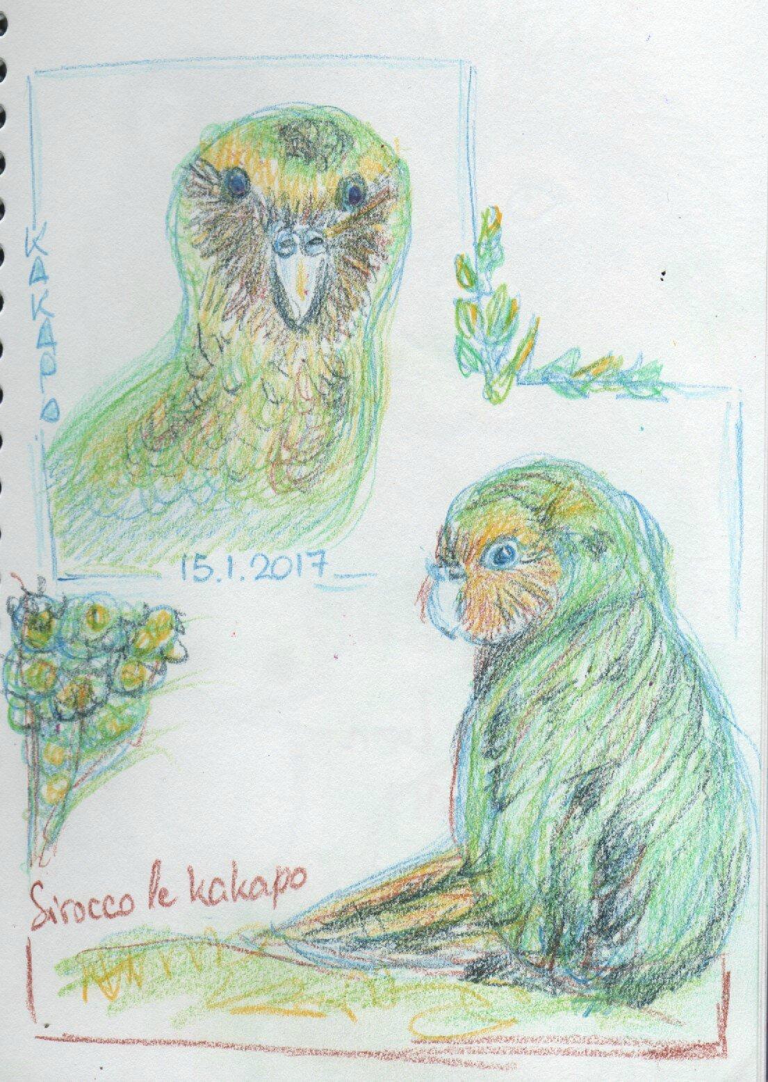 0115_kakapo