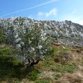 2009 10 13 Premier jour de givre au sommet du Mézenc le 13 octobre 2009 (11)