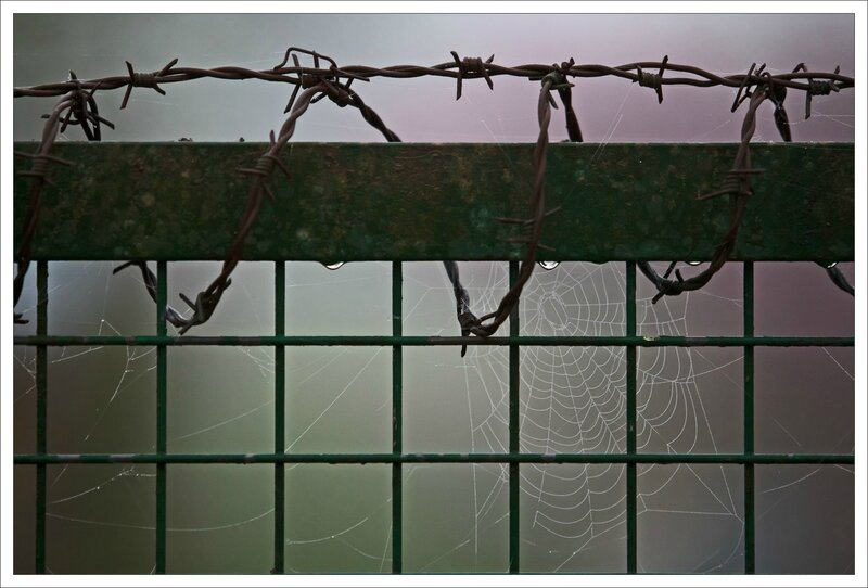 jardin barbelé toile araignée gouttes matin 030415