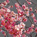 209 - bientôt le printemps....