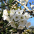 cerisier2020_6