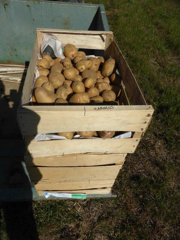 14-pommes de terre (24)