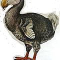 dodo de Géo