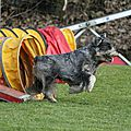 Agility concours
