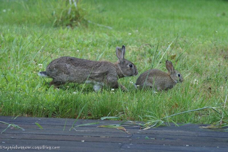 lapins maman et son petit
