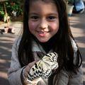 Butterfly (54)