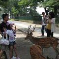 Bambi in the city of Nara