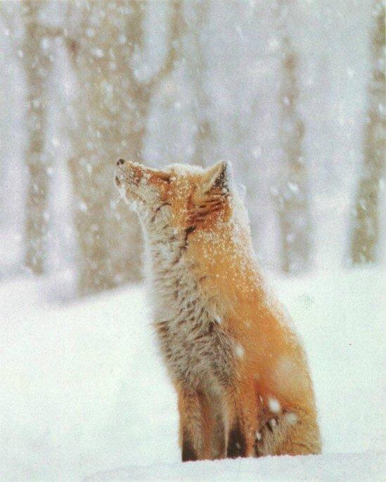 animals-in-snow16