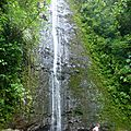 Manoa Falls Trail (216)