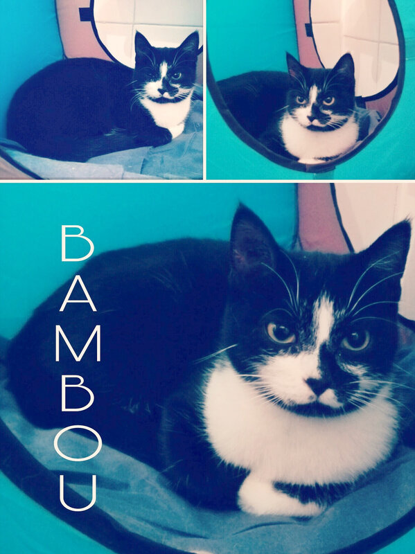 photomontage bambou
