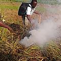 La formation à loudima sur la formation sur la culture du manioc organisée par la pam programme alimentaire mondiale en 2019