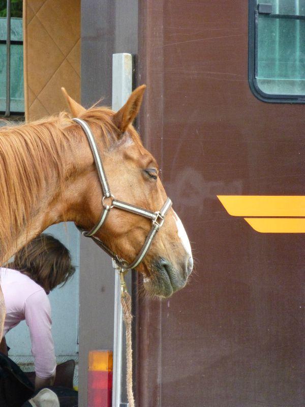 balade equestre gastronomique à La Lucerne d'Outremer (197)