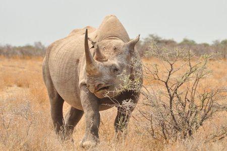 Namibie (223)