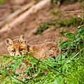 2014-05-30 LUX-1015