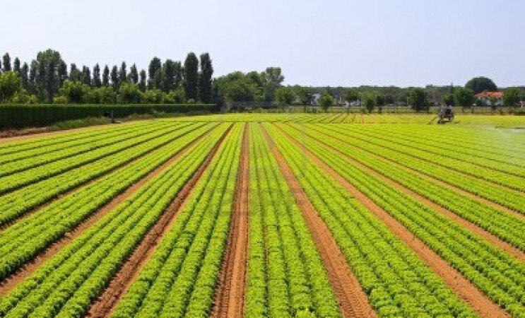 10299101-domaine-de-l-39-agriculture-big-de-legumes-salade-verte