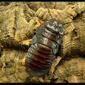 Les bases pour l'élevage des blattes.