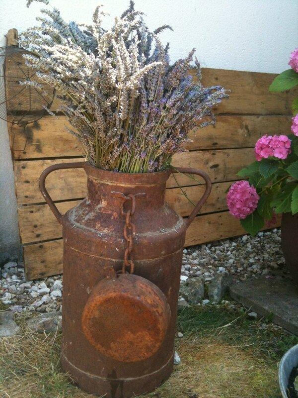 Ancien pot à lait et lavande du jardin