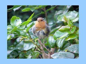 bel oiseau 8