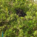 Le chat noir qui croit que personne ne le voit