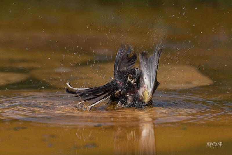 L'heure du bain-3